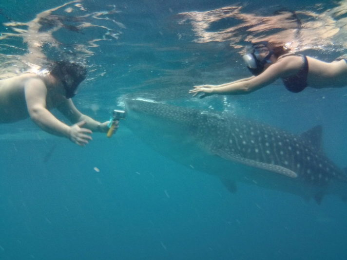 plavanie-s-kitovoj-akuloj-Filippiny