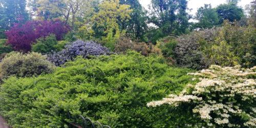Риджентс-парк The Regent's Park